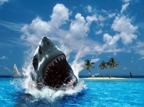 -Shark-sharks-10311334-1024-768