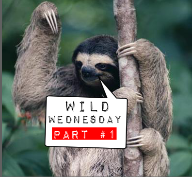 WIld Wednesday Part #1
