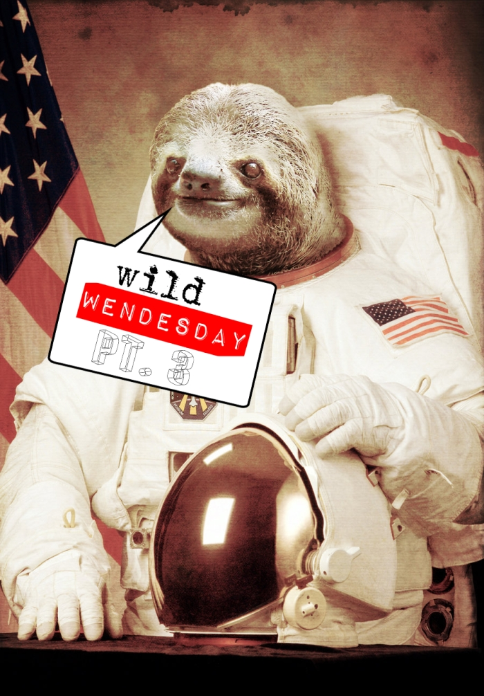 Wild Wednesday Pt. 3